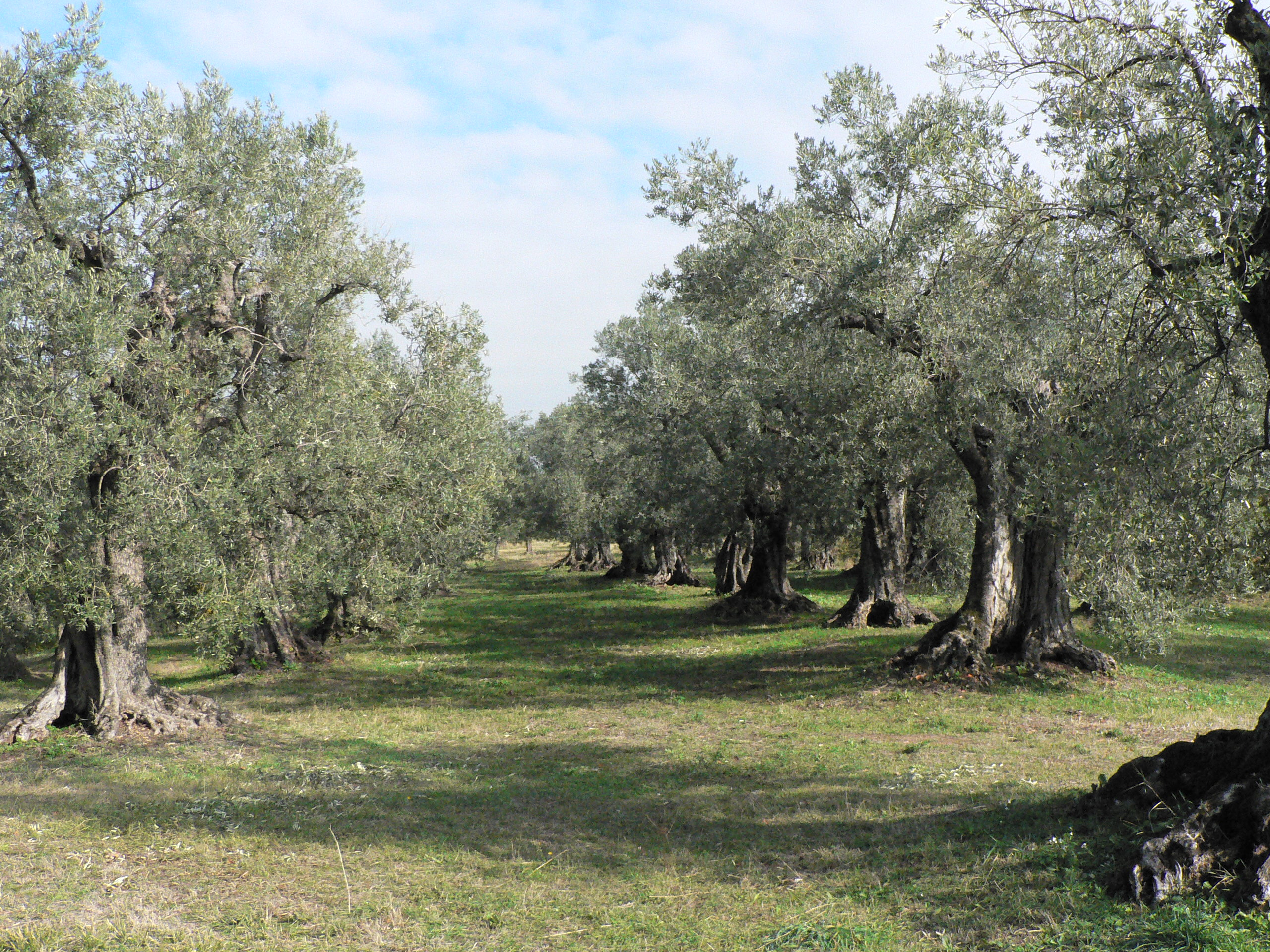 Late September Sagrantino In Umbria Insider 39 S Italy