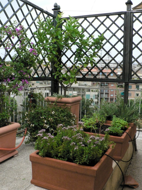 1000 Images About Taras Balkon On Pinterest Gardens
